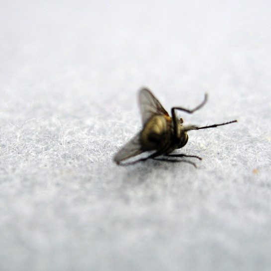 fly found dead at Frieze #1