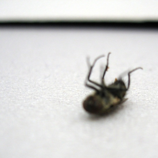 fly found dead at Frieze #3