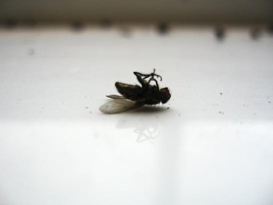 a recent death 1