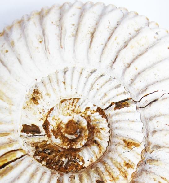 Ammonite: sebastiane hegarty