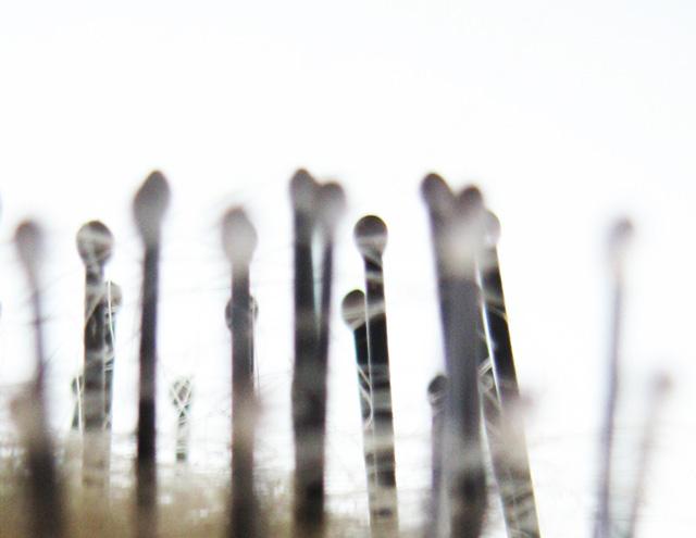 relics: hairbrush: sebastiane hegarty