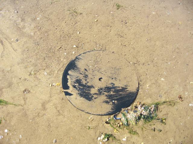 vinyl tide at Holme-next-the-sea: sebastiane hegarty