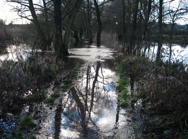 flooded_path3_w