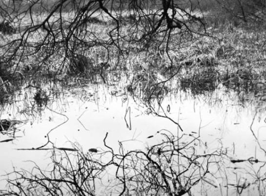 four walks around a year: winter flood