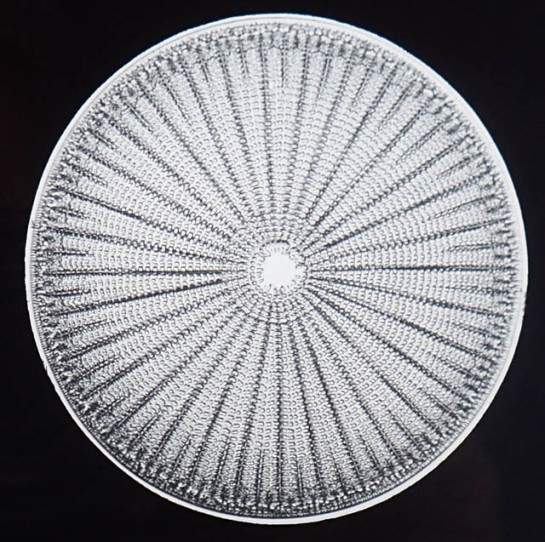 diatom_magic lantern