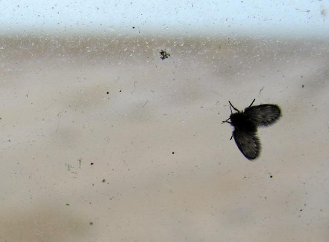 moth light: orford ness