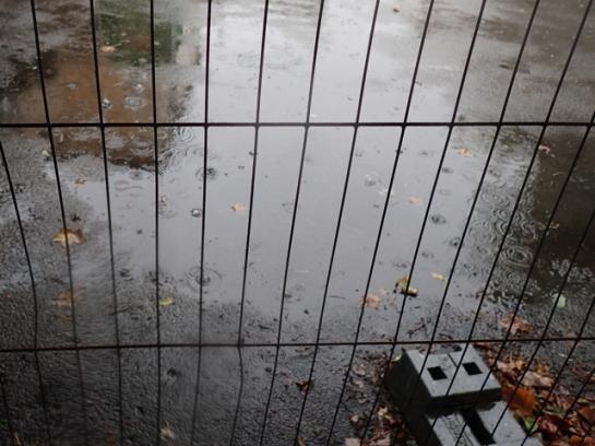 rain fenced in